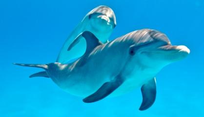 fotos-reproduccion-delfines